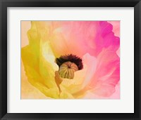Poppy Gradient II Framed Print