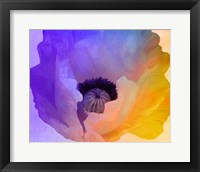 Poppy Gradient III Framed Print