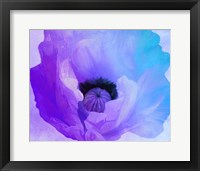 Poppy Gradient IV Framed Print
