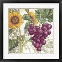 Dolcetto II Framed Print