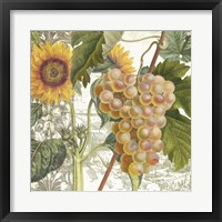 Dolcetto IV Framed Print