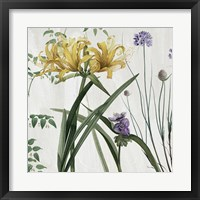 Softly IV Framed Print