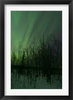 Framed Aurora Borealis over Trees