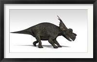 Achelousaurus dinosaur Framed Print