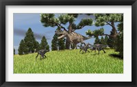 Framed Ceratosaurus Chasing Gigantoraptors