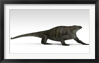 Cotylorhynchus Framed Print