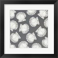 Scattered Shells II Framed Print