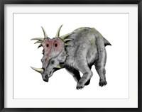 Framed Styracosaurus Dinosaur