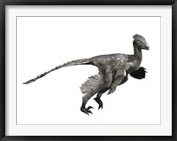 Framed Troodon Dinosaur