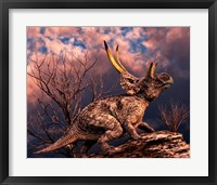 Framed Diabloceratops