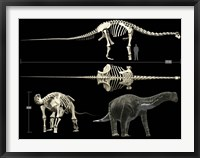 Framed Anatomy of a Titanosaur