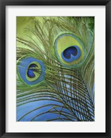 Peacock Candy I Framed Print