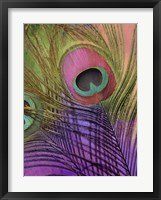 Peacock Candy III Framed Print
