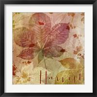 October Pastel I Framed Print