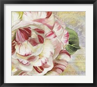 Camellias II Framed Print