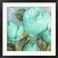 Aqua Rose II Framed Print