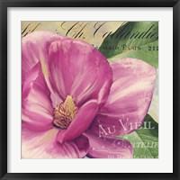Pink Magnolia II Framed Print