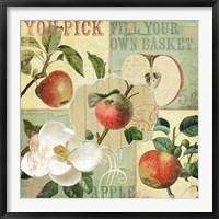 Apple Blossoms II Framed Print