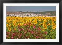 Framed Spain, Andalusia, Bornos Sunflower Fields