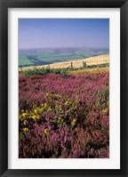 Framed Cosgate Hill, Exmoor, Devon, England
