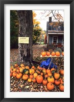 Framed Pumpkins For Sale in New England