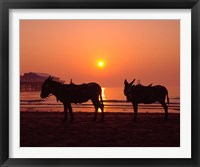 Framed Donkeys at Central Pier, Blackpool, Lancashire, England