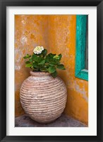 Framed Flower in pot, Crete, Greece