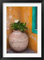 Framed Flower in pot, Crete, Greece