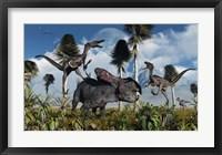 Velociraptors Attack a Lone Protoceratops Framed Print