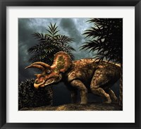 Framed Triceratop, Herbivorous Dinosaur from the Cretaceous Period