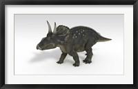 Triceratops Dinosaur 3 Framed Print