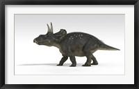 Triceratops Dinosaur 5 Framed Print