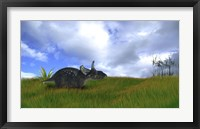 Framed Triceratops Walking across Prehistoric Grasslands