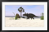 Framed Triceratops Walking along a Prehistoric Beach Landscape