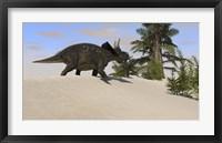 Triceratops Walking along a Prehistoric Landscape Framed Print