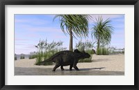 Framed Triceratops Walking along the Shoreline 2