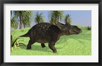 Framed Triceratops Walking in Open Field