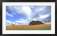 Framed Triceratops Walking through Tall Grass
