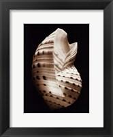 Tonna Framed Print