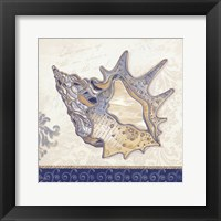 Ocean Conch Framed Print