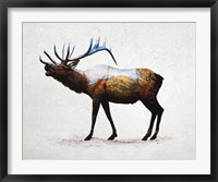 Framed Rocky Mountain Elk