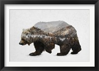 Framed Kodiak Brown Bear