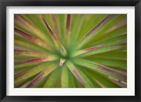 Framed Arizona Monocot