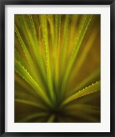 Framed California Monocot