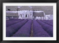 Framed Lavender Abbey