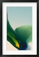 Framed Flora 9