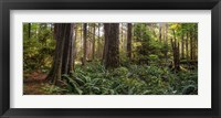 Framed Cathedral Forest