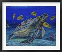 Framed Turtle Tale