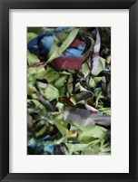 Color Cups & Tape 41 Framed Print
