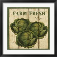 Farm Fresh Cabbage Framed Print